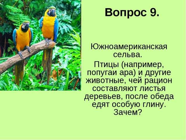 Вопрос 9. Южноамериканская сельва. Птицы (например, попугаи ара) и другие жив...