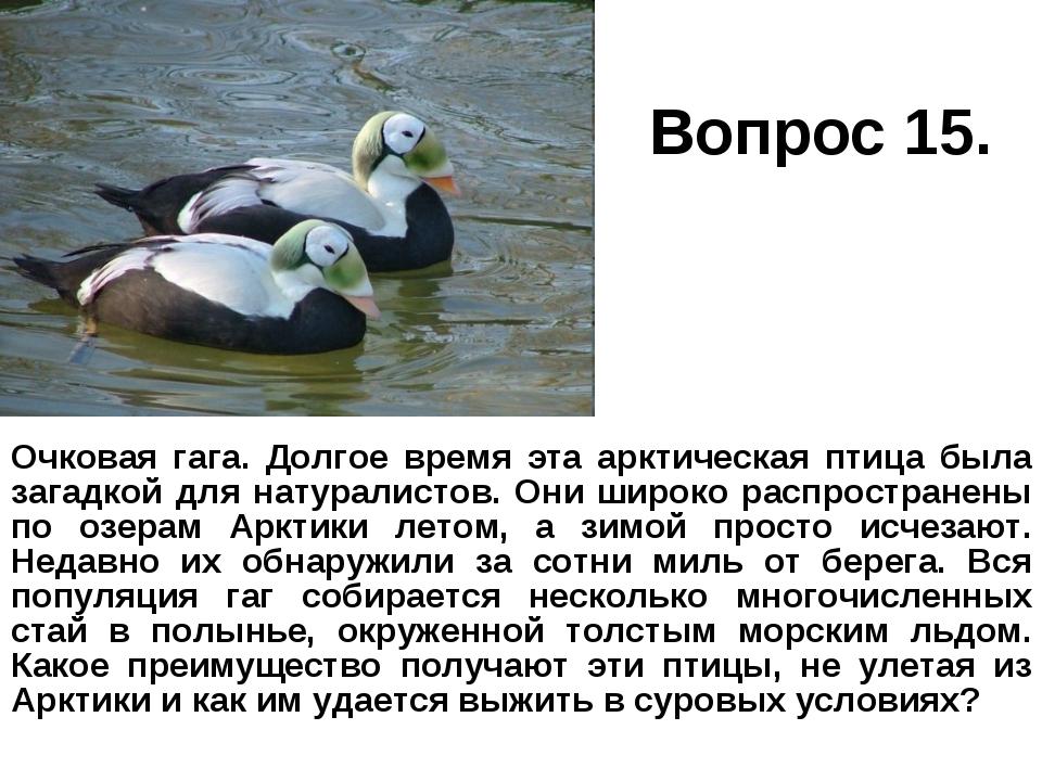 Вопрос 15. Очковая гага. Долгое время эта арктическая птица была загадкой для...