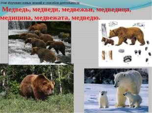 Этап Изучение новых знаний и способов деятельности Медведь, медведи, медвежь