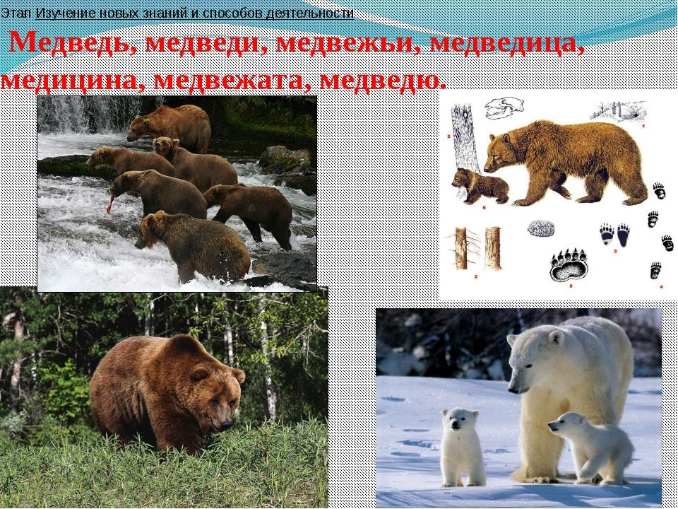 Этап Изучение новых знаний и способов деятельности Медведь, медведи, медвежь...