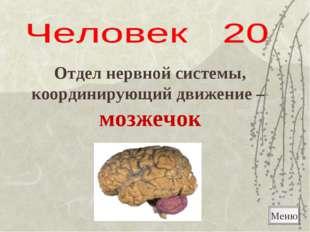 Меню Отдел нервной системы, координирующий движение – мозжечок