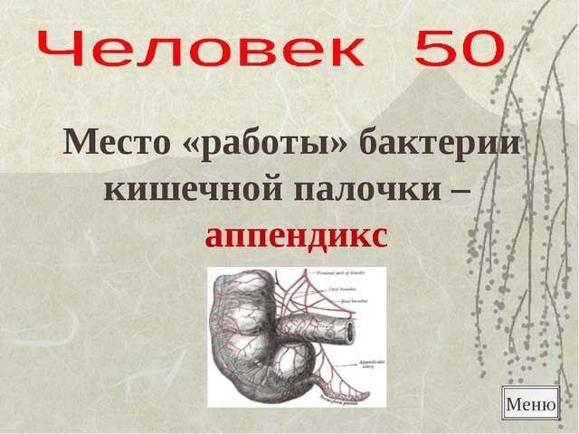 Меню Место «работы» бактерии кишечной палочки – аппендикс