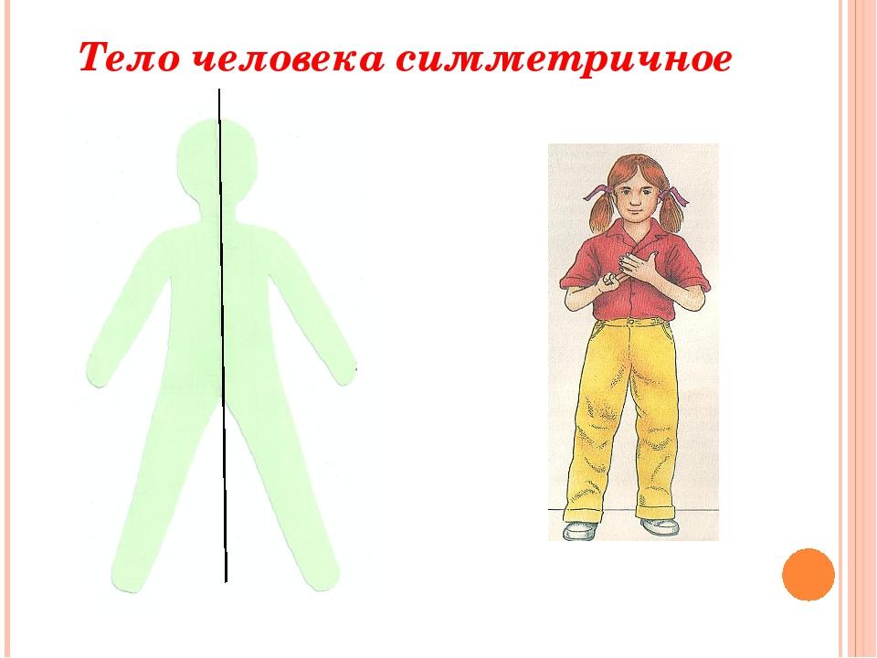 Тело человека симметричное