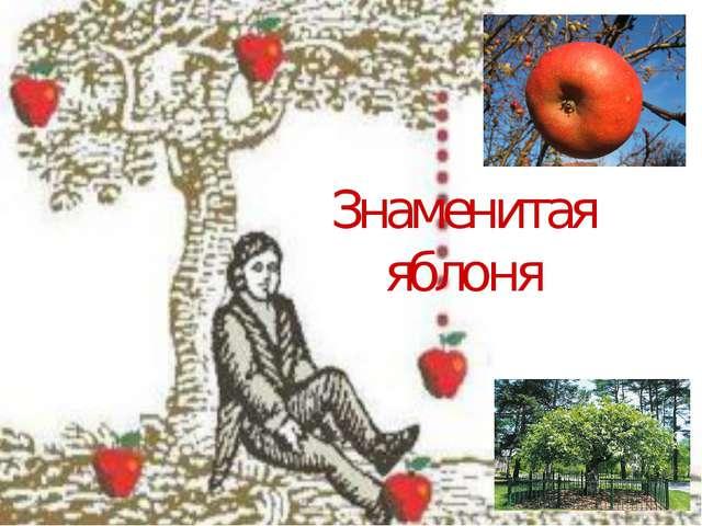 Знаменитая яблоня