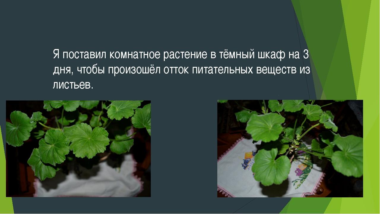 Я поставил комнатное растение в тёмный шкаф на 3 дня, чтобы произошёл отток п...