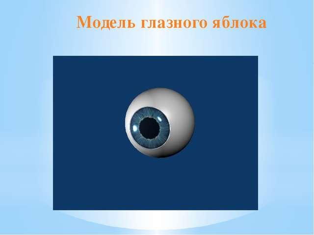 Модель глазного яблока