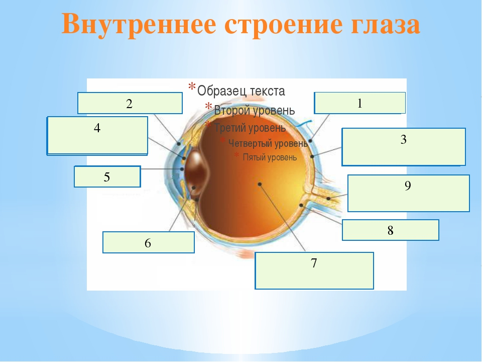 Внутреннее строение глаза склера 1 роговица 2 сосудистая оболочка 3 зрачок 5...