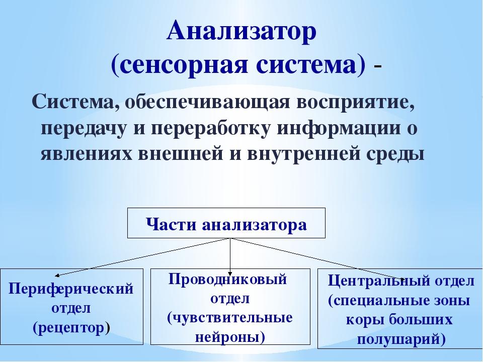 Анализатор (сенсорная система) - Система, обеспечивающая восприятие, передачу...