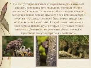 Не следует приближаться к звериным норам и птичьим гнездам, если в них есть м