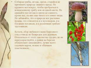 Собирая грибы, ягоды, орехи, старайся не причинять природе лишнего вреда. Не