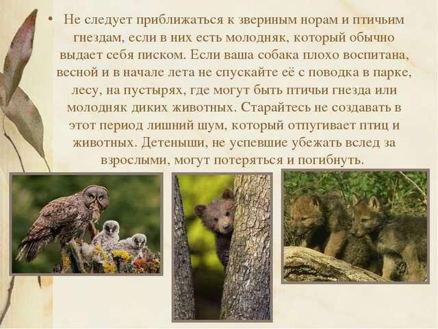 Не следует приближаться к звериным норам и птичьим гнездам, если в них есть м...
