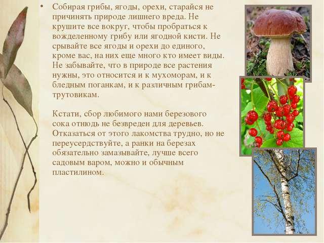 Собирая грибы, ягоды, орехи, старайся не причинять природе лишнего вреда. Не...