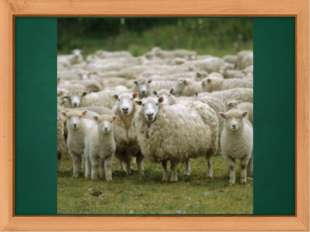 The revision of numbers. How many sheep can you see on this picture? (It`s a