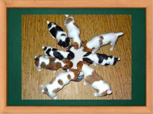 The revision of numbers. How many puppies can you see on this picture?