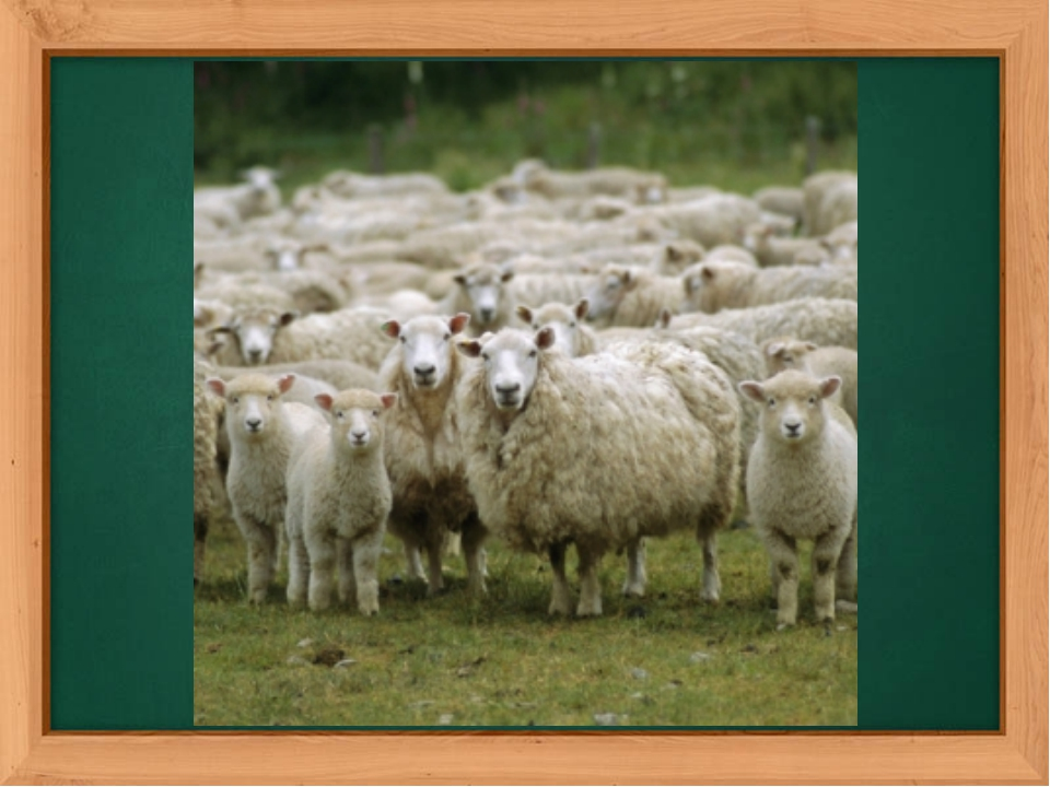 The revision of numbers. How many sheep can you see on this picture? (It`s a...