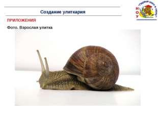 ПРИЛОЖЕНИЯ Фото. Взрослая улитка Создание улиткария