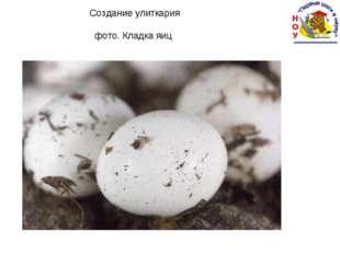 Создание улиткария фото. Кладка яиц