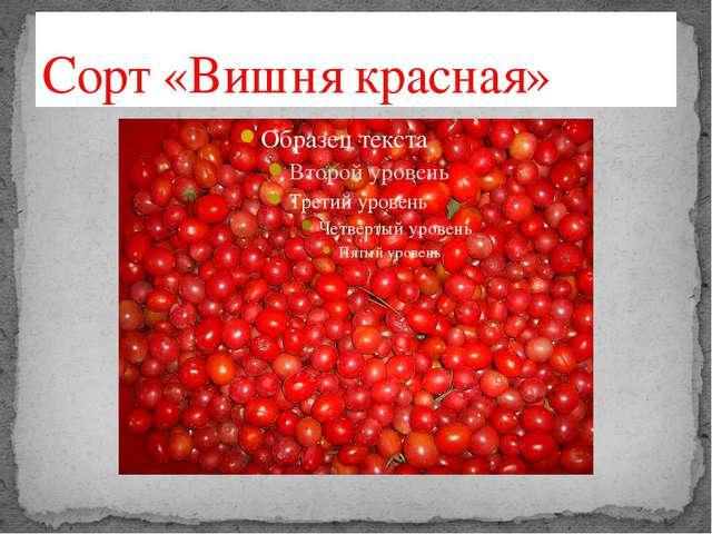 Сорт «Вишня красная»