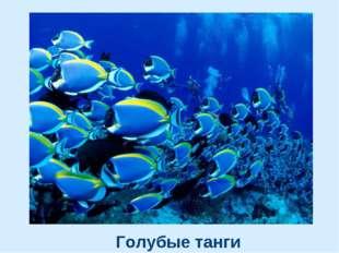 Голубые танги
