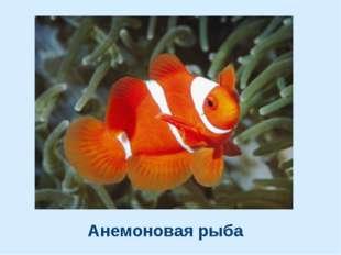 Анемоновая рыба