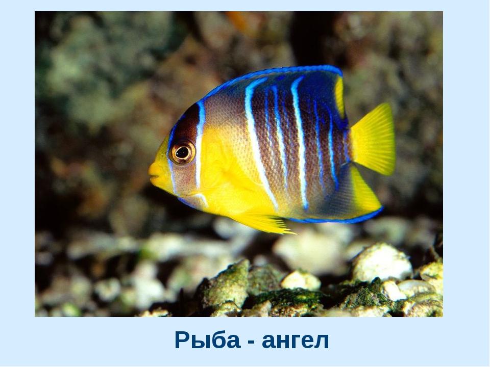 Рыба - ангел