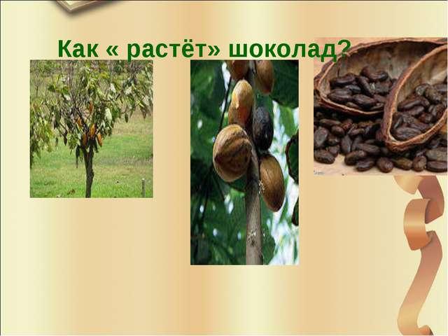 Как « растёт» шоколад?