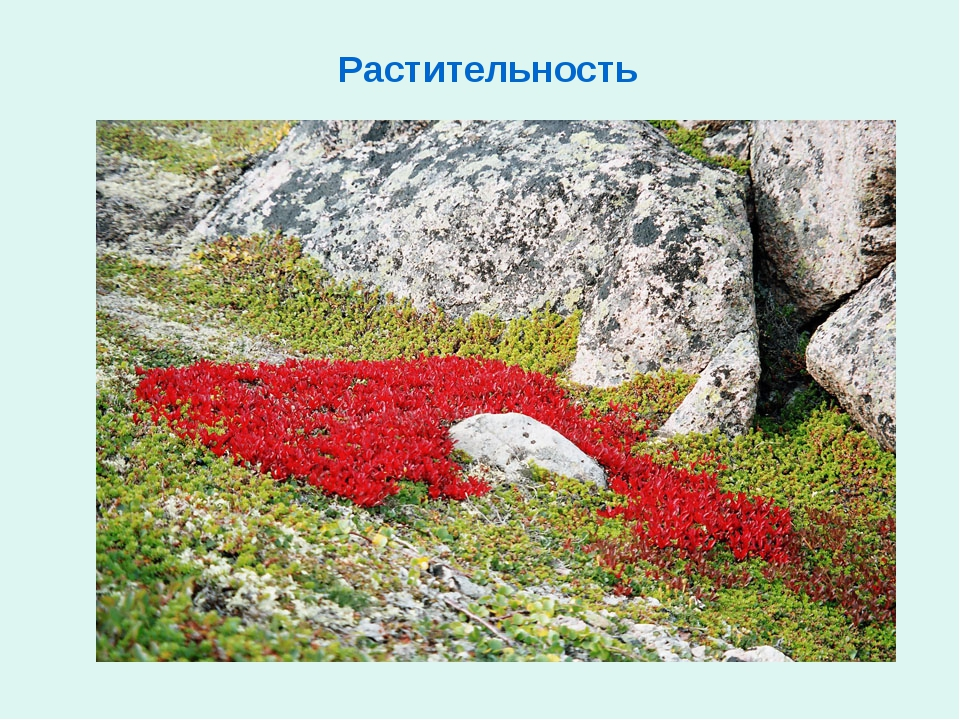 Растительность