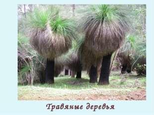 Травяные деревья
