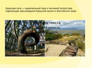 Куршская коса— национальный парк ипесчаный полуостров, отделяющий пресновод