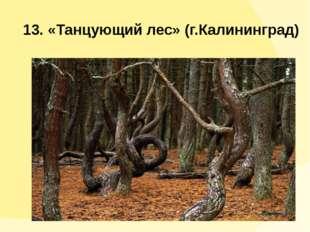 13. «Танцующий лес» (г.Калининград)