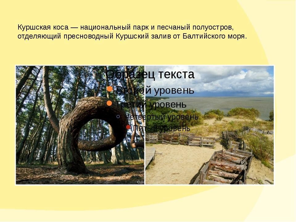 Куршская коса— национальный парк ипесчаный полуостров, отделяющий пресновод...