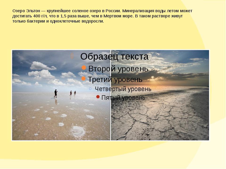 Озеро Эльтон— крупнейшее соленое озеро вРоссии. Минерализация воды летом мо...