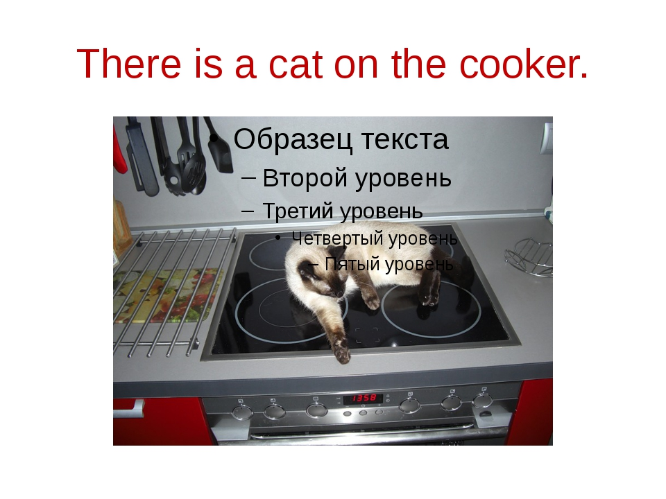 There is a cat on the cooker.