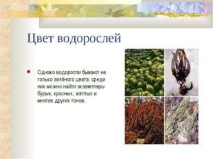 Цвет водорослей Однако водоросли бывают не только зелёного цвета: среди них м