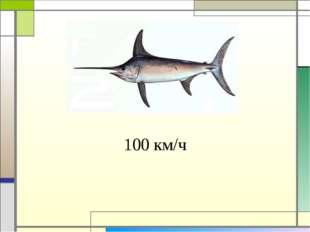 100 км/ч