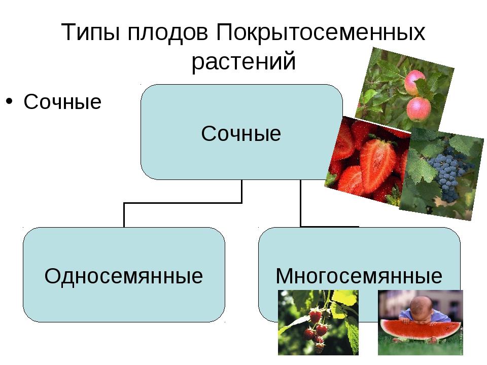 Типы плодов Покрытосеменных растений Сочные