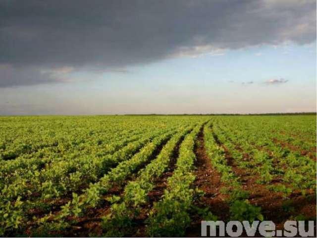 Овощное поле