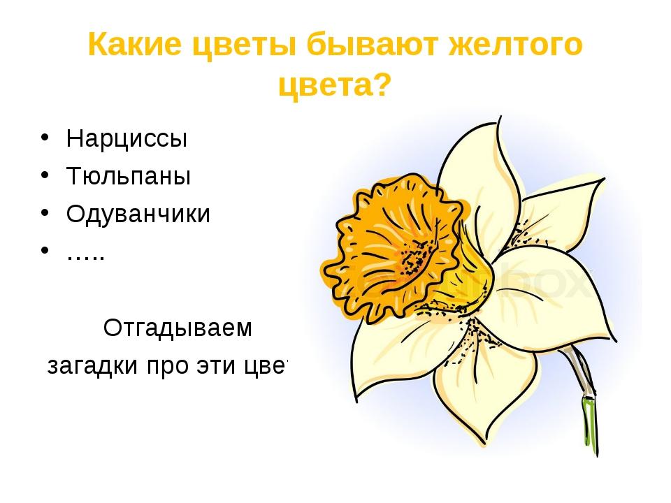 Какие цветы бывают желтого цвета? Нарциссы Тюльпаны Одуванчики ….. Отгадываем...
