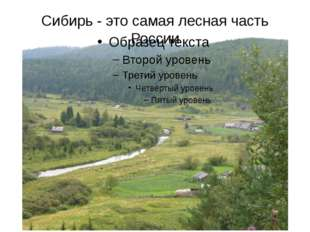 Сибирь - это самая лесная часть России