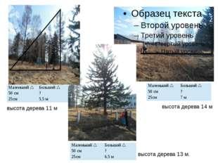 высота дерева 14 м высота дерева 13 м. высота дерева 11 м Маленький Большой