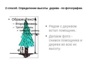 2 способ. Определение высоты дерева - по фотографии. Рядом с деревом встал по