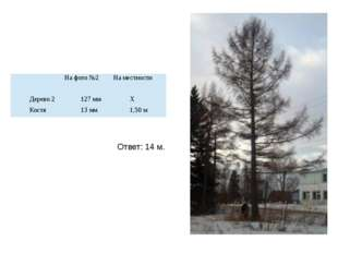 Ответ: 14 м. На фото №2 На местности Дерево 2 127 мм Х Костя 13 мм 1,50 м