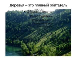 Деревья – это главный обитатель лесов