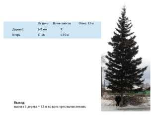 Вывод: высота 1 дерева = 13 м во всех трех вычислениях. На фото На местности