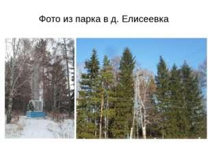 Фото из парка в д. Елисеевка