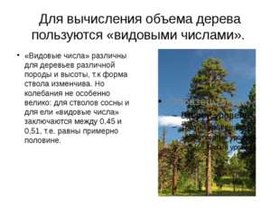 Для вычисления объема дерева пользуются «видовыми числами». «Видовые числа» р