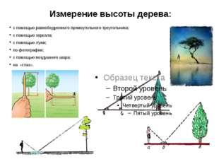 Измерение высоты дерева: с помощью равнобедренного прямоугольного треугольник