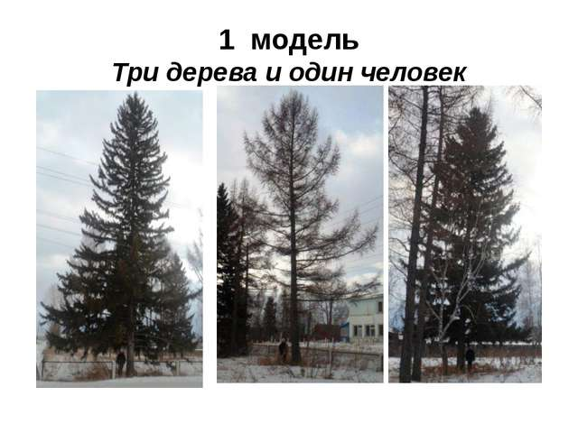 1 модель Три дерева и один человек