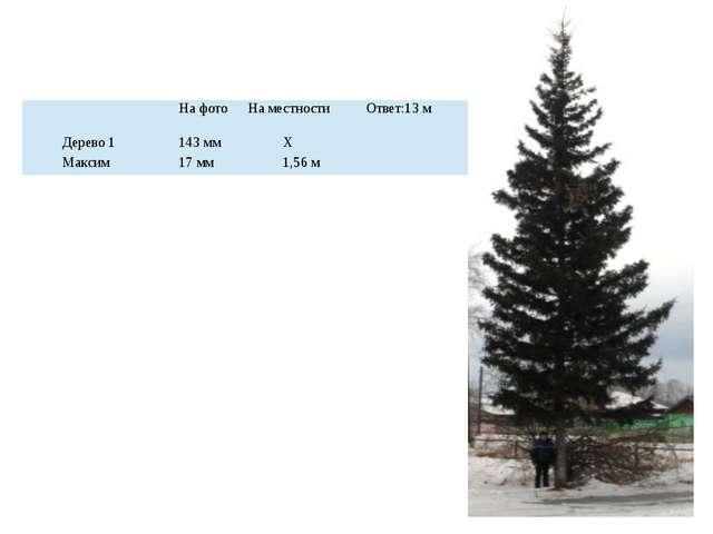 На фото На местности Ответ:13 м Дерево 1 143 мм Х Максим 17 мм 1,56 м