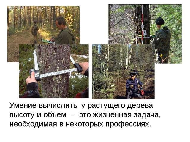 Умение вычислить у растущего дерева высоту и объем – это жизненная задача, не...